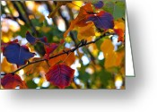 Fall Leaves Photo Greeting Cards - Leaves of Autumn Greeting Card by Stephen Anderson