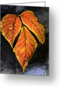 Calm Framed Prints Prints Greeting Cards - Leaves on a Branch Greeting Card by Paul Pobiak