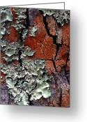 Structure Photo Greeting Cards - Lichen On Tree Bark Greeting Card by John Foxx