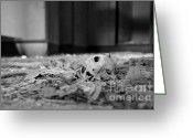 Black And White Cat Greeting Cards - Life Number 10 Greeting Card by Luke Moore