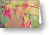 Fushia Photo Greeting Cards - Lightly Pink Greeting Card by Kerry Kralovic
