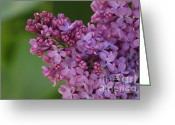 Tiny Flowers Greeting Cards - Lilac 2 Greeting Card by Carol Lynch
