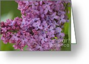 Tiny Flowers Greeting Cards - Lilac 3 Greeting Card by Carol Lynch