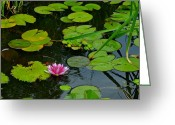 Lilly Pads Photo Greeting Cards - Lilly Pads Greeting Card by Robert Harmon