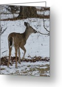 Rudolph Greeting Cards - Little White Tail on the Move Greeting Card by LeeAnn McLaneGoetz McLaneGoetzStudioLLCcom