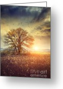 Omnimous Greeting Cards - Lone tree in autumn farm field  Greeting Card by Sandra Cunningham