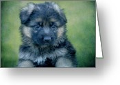 Alsatian Greeting Cards - Long Coated Puppy Greeting Card by Sandy Keeton