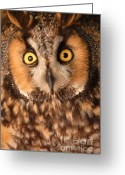 Long Eared Owl Greeting Cards - Long Eared Owl Greeting Card by Dennis Hammer