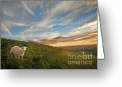Mound Greeting Cards - Long Mynd Hill Greeting Card by Angel  Tarantella