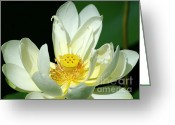 Lilies Greeting Cards - Lotus Blooming Greeting Card by Sabrina L Ryan