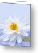 Floating Greeting Cards - Lotus flower Greeting Card by Elena Elisseeva