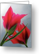 Photographic Art Greeting Cards - Love Greeting Card by Rona Black