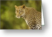 Cats Greeting Cards - Lovely Leopard Greeting Card by Michele Burgess