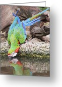 Talking Birds Greeting Cards - Macaw  Greeting Card by Anek Suwannaphoom