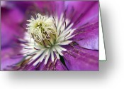 Claire Copley Greeting Cards - Macro Purple Clematis Flower Greeting Card by Pixie Copley