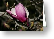 National Pyrography Greeting Cards - Magnolia World Of Beauty Greeting Card by Valia Bradshaw