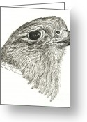 Falcon Drawings Greeting Cards - Merlin Falcon Greeting Card by Brenda Diller