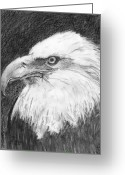 Drawing Of Bird Greeting Cards - Mighty Eagle Greeting Card by Gail Schmiedlin