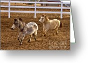 Colorado Creatures Greeting Cards - Miniature Horse Greeting Card by Crystal Garner