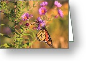Aster  Greeting Cards - Monarch Butterfly on Asters Greeting Card by John Burk