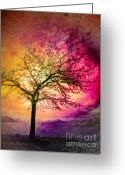 Okanagan Greeting Cards - Morning Fire Greeting Card by Tara Turner