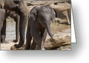 India Greeting Cards - Mother and baby Greeting Card by Jane Rix