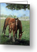 Quarter Horse Greeting Cards - Mother and Colt Greeting Card by Donna Tucker