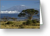 Tree. Acacia Greeting Cards - Mount Kilimanjaro Greeting Card by Michele Burgess