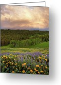 Balsamroot Greeting Cards - Mountain Color Greeting Card by Leland Howard