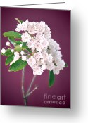 Mountain Laurel Greeting Cards - Mountain Laurel Greeting Card by HD Connelly