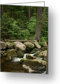 Nature Landscape Pyrography Greeting Cards - Mountain stream Greeting Card by Torsten Dietrich