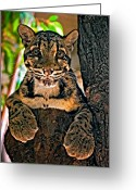 Hunter Greeting Cards - Ms Paws Greeting Card by Steve Harrington