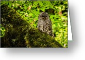 Owl Photography Greeting Cards - Muir Woods Owl Greeting Card by La Rae  Roberts