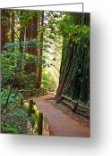 Path Greeting Cards - Muir Woods Greeting Card by Patricia Stalter