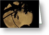 May Pyrography Greeting Cards - Mystic Moon Greeting Card by Gloria Warren