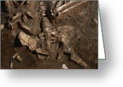 Moshe Greeting Cards - Neanderthal Skeleton, Kebara Cave, Israel Greeting Card by Javier Truebamsf