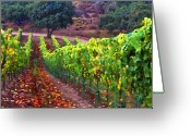 Vineyard Digital Art Greeting Cards - Nearly Harvest Greeting Card by Patricia Stalter