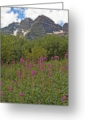 Fireweed Greeting Cards - North and South Maroon Bells and Fireweed Colorado Greeting Card by Brendan Reals
