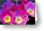 Staley Art Mixed Media Greeting Cards - October Tulips Greeting Card by Chuck Staley