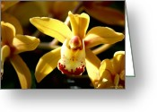 Susan Stevens Crosby Greeting Cards - Odontoglossum orchid Greeting Card by Susan Stevens Crosby