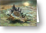 Designs With Photography Greeting Cards - Of the Sea Greeting Card by Shirley Sirois