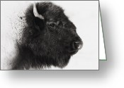Buffalo Greeting Cards - Once We Were Many Greeting Card by Ron  McGinnis