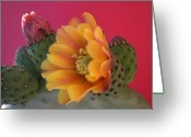 Desert Southwest Greeting Cards - Orange Cactus Blossom  Greeting Card by Aleksandra Buha