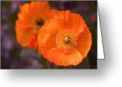 Stamen Greeting Cards - Orange Poppies Greeting Card by Rona Black