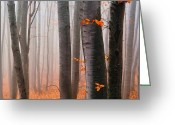 Fall Leaves Photo Greeting Cards - Orange Wood Greeting Card by Evgeni Dinev