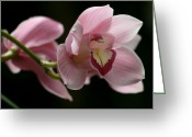 Garden Pyrography Greeting Cards - Orchids  Mystery Greeting Card by Valia Bradshaw