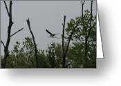 At Work Greeting Cards - Osprey Construction Greeting Card by Neal  Eslinger