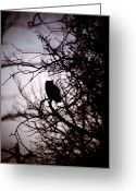 Rural Posters Framed Prints Greeting Cards - Owl Silhouette Greeting Card by Larysa Luciw