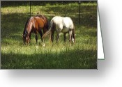 Quarter Horses Greeting Cards - Pals Greeting Card by Lynn Moon