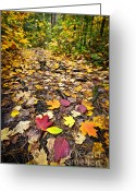 Fall Leaves Photo Greeting Cards - Path in fall forest Greeting Card by Elena Elisseeva